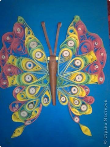 моя первая бабочка