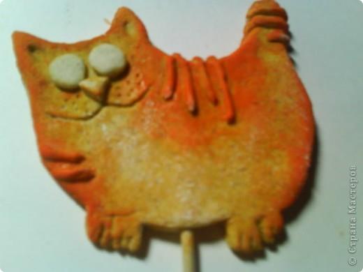 Котик фото 6