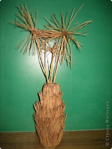 Панно из семян. Крупные элементы наклеены на картонные кружочки с помощью клея ПВА. фото 2