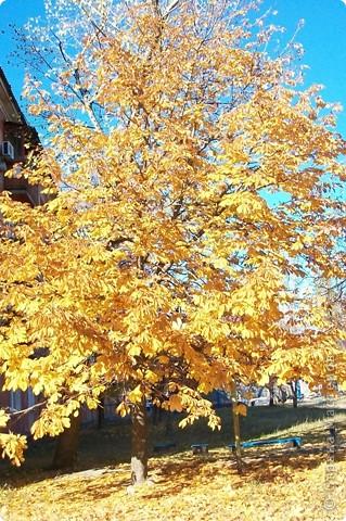 Разноцветная осень. фото 1