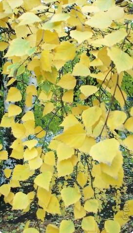 Разноцветная осень. фото 10