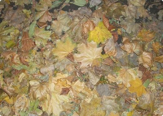 Разноцветная осень. фото 11