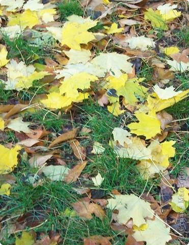 Разноцветная осень. фото 12