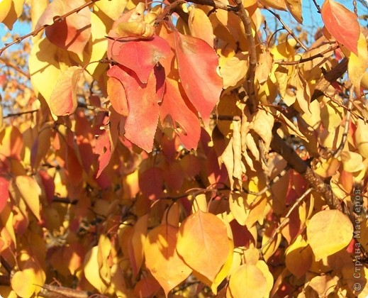 Разноцветная осень. фото 2