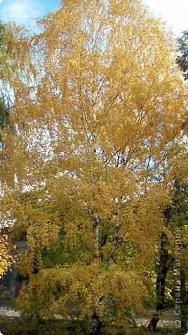 Разноцветная осень. фото 3