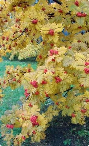Разноцветная осень. фото 4