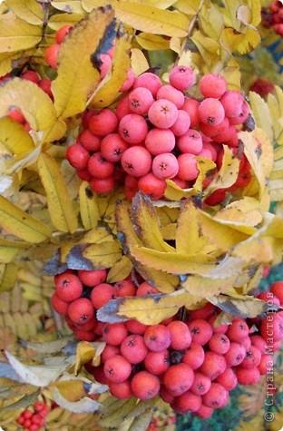 Разноцветная осень. фото 5