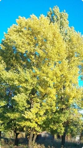 Разноцветная осень. фото 6