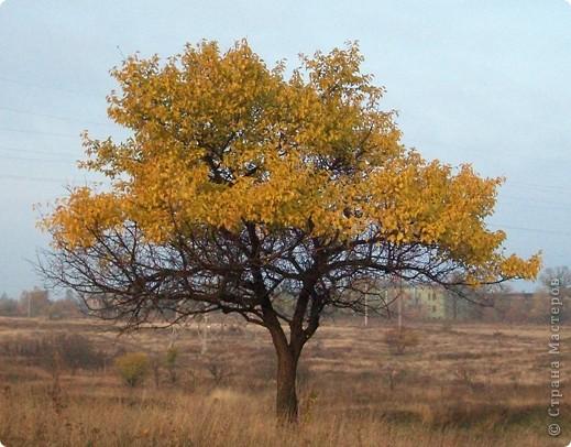 Разноцветная осень. фото 7