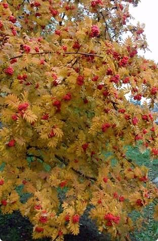 Разноцветная осень. фото 8