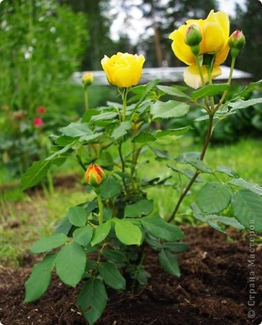 Миллион роз... фото 1