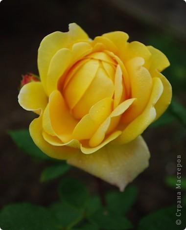 Миллион роз... фото 2