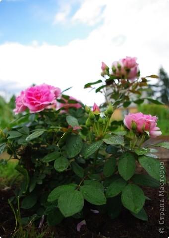 Миллион роз... фото 3