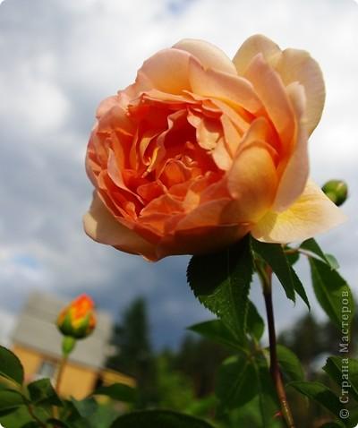 Миллион роз... фото 6