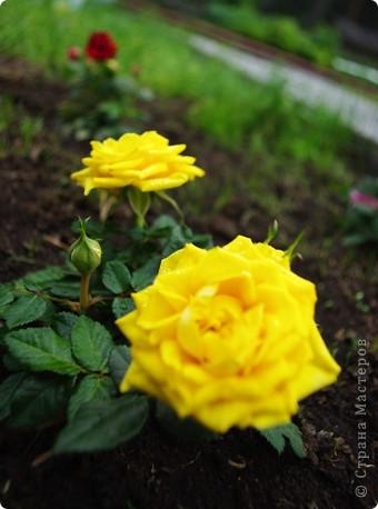 Миллион роз... фото 10