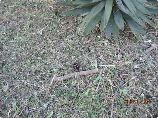 Надумали мы пойти в парк,который находится недалеко от Токийского залива. Там растет очень много сосен. В прошлом году мы там насобирали очень много шишек. Собрались на охоту и в этот раз. фото 5
