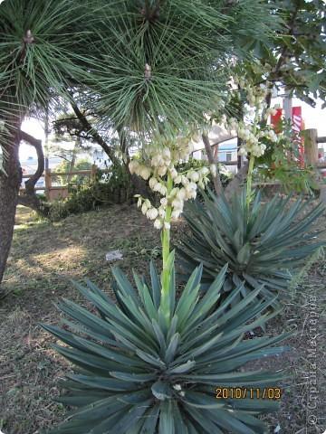 Надумали мы пойти в парк,который находится недалеко от Токийского залива. Там растет очень много сосен. В прошлом году мы там насобирали очень много шишек. Собрались на охоту и в этот раз. фото 7