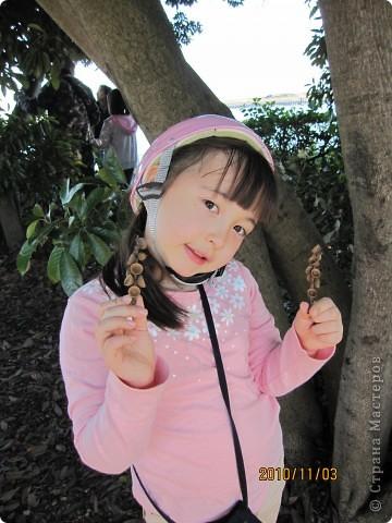 Надумали мы пойти в парк,который находится недалеко от Токийского залива. Там растет очень много сосен. В прошлом году мы там насобирали очень много шишек. Собрались на охоту и в этот раз. фото 25