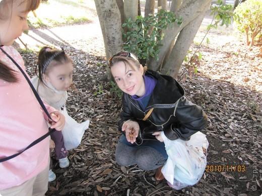 Надумали мы пойти в парк,который находится недалеко от Токийского залива. Там растет очень много сосен. В прошлом году мы там насобирали очень много шишек. Собрались на охоту и в этот раз. фото 27