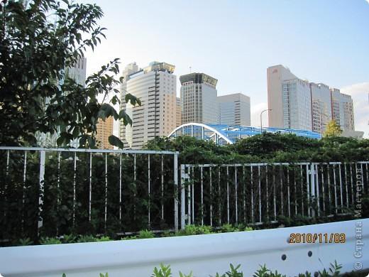 Надумали мы пойти в парк,который находится недалеко от Токийского залива. Там растет очень много сосен. В прошлом году мы там насобирали очень много шишек. Собрались на охоту и в этот раз. фото 29