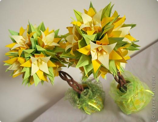 Лилейные деревья фото 2
