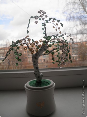 Мои деревца. фото 2