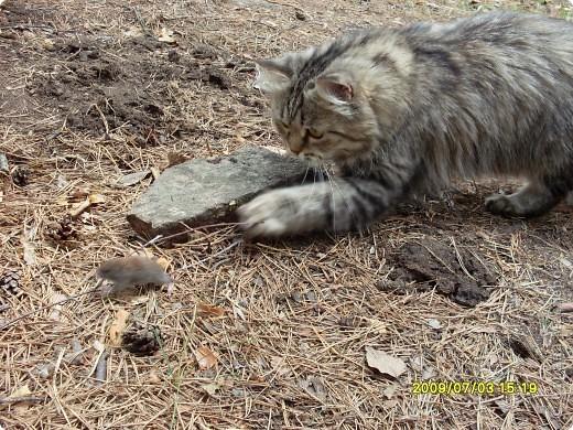 """Игра """"Кошки-мышки"""". Наша Дашка любит эту игру. фото 1"""