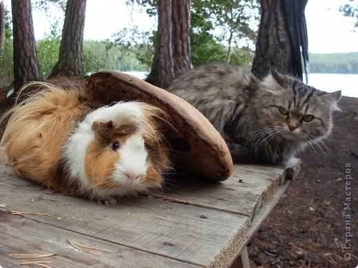 """Игра """"Кошки-мышки"""". Наша Дашка любит эту игру. фото 3"""