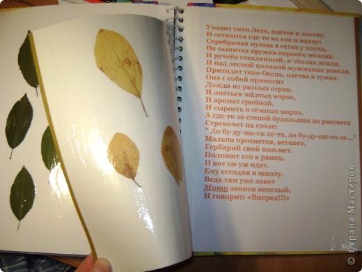 Летние и осенние листья. фото 1