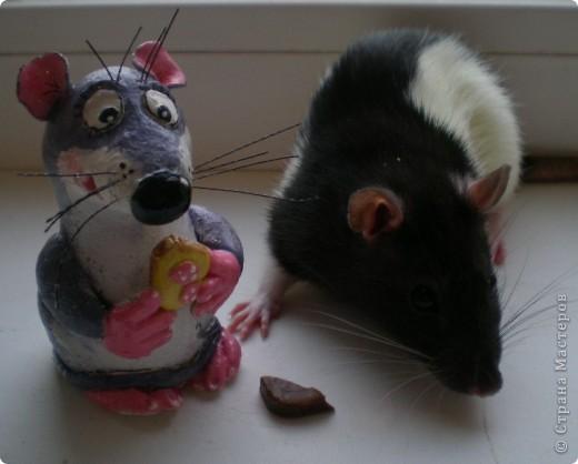 Мои крыски фото 1