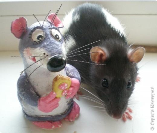 Мои крыски фото 2