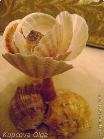 Роза из ракушек фото 2