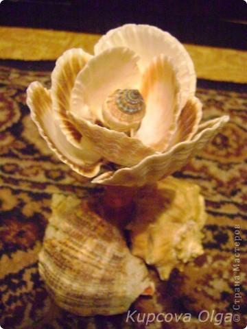 Роза из ракушек фото 1