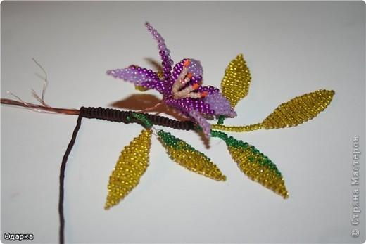 Вот такой одинокий осенний цветочек!О чем он думает?Наверное о том,что осень--яркая,цветная,золотая!!!!!!!!И не надо грустить!!!То что он одинок-не беда...За то он гордится собой!!!!!!!!! фото 10