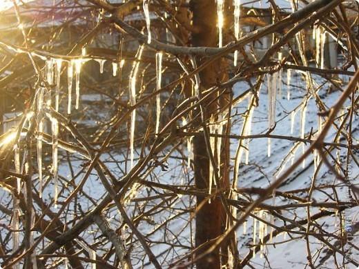 Яблоня за моим окном вся увешана сосульками..... фото 2