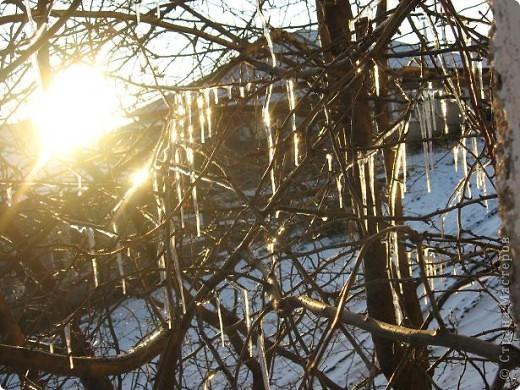 Яблоня за моим окном вся увешана сосульками..... фото 1