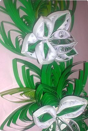 Один из первых цветочков фото 2