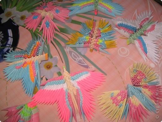 Бабочки. фото 2