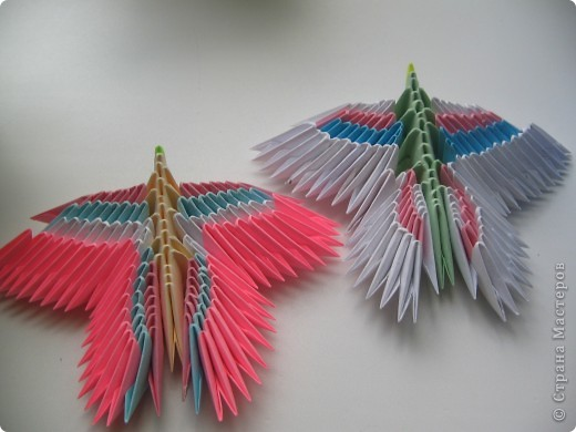 Бабочки. фото 5