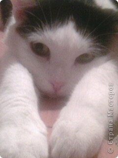 мой котик фото 1