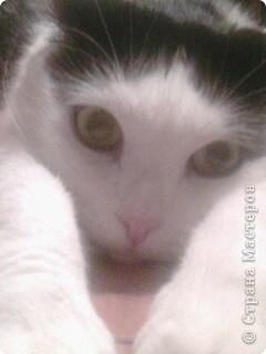 мой котик фото 2