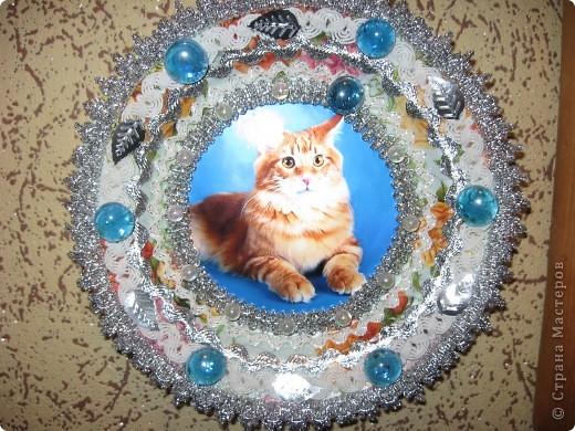 Рыжий кот. фото 1