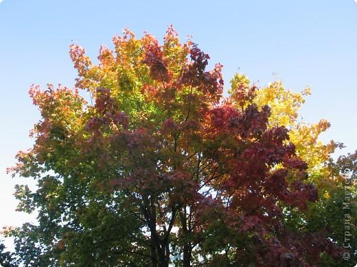 Вот такая красота растет на территории нашего детского сада. фото 1