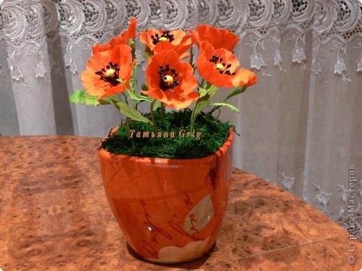 Ура!!!! Я сегодня сделала свои любимые цветы МАКИ.  фото 3