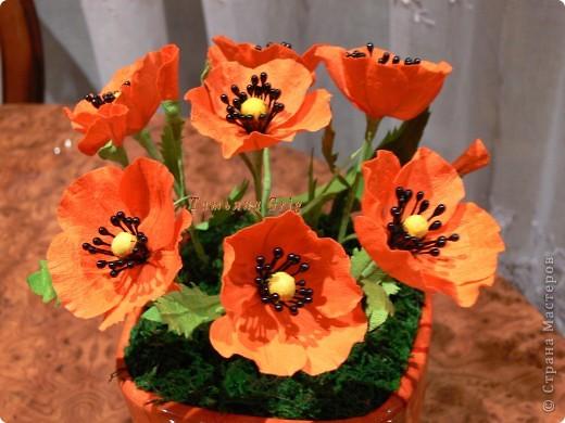 Ура!!!! Я сегодня сделала свои любимые цветы МАКИ.  фото 1