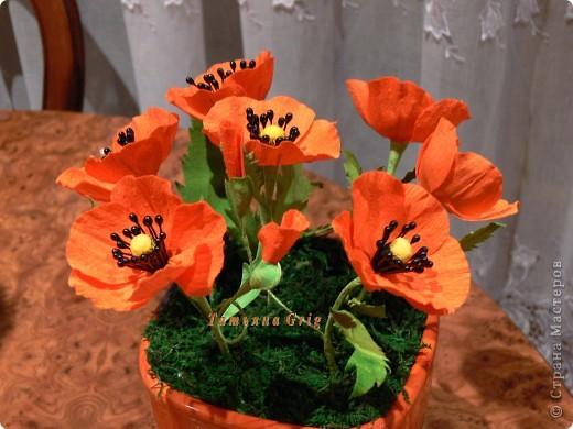 Ура!!!! Я сегодня сделала свои любимые цветы МАКИ.  фото 2