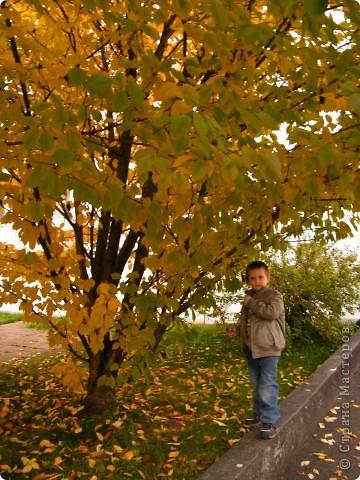 Отправляемся на прогулку в лес!  первая фотоостановка недалеко от дома. Вот такая красочная плетущаяся стена находтся на нашей улице! фото 3