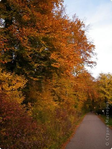 Отправляемся на прогулку в лес!  первая фотоостановка недалеко от дома. Вот такая красочная плетущаяся стена находтся на нашей улице! фото 10
