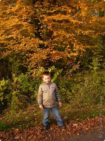 Отправляемся на прогулку в лес!  первая фотоостановка недалеко от дома. Вот такая красочная плетущаяся стена находтся на нашей улице! фото 13