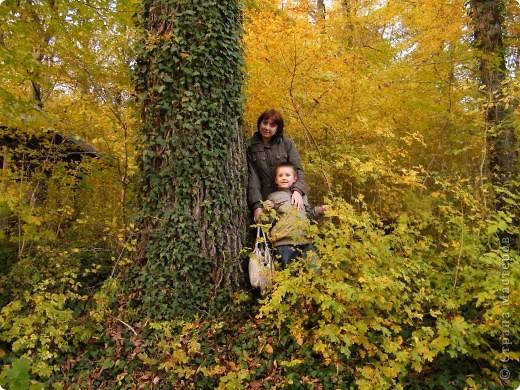 Отправляемся на прогулку в лес!  первая фотоостановка недалеко от дома. Вот такая красочная плетущаяся стена находтся на нашей улице! фото 17
